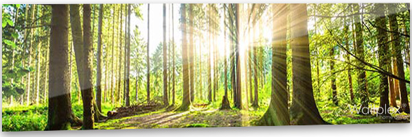 konyhai fali panel erdő
