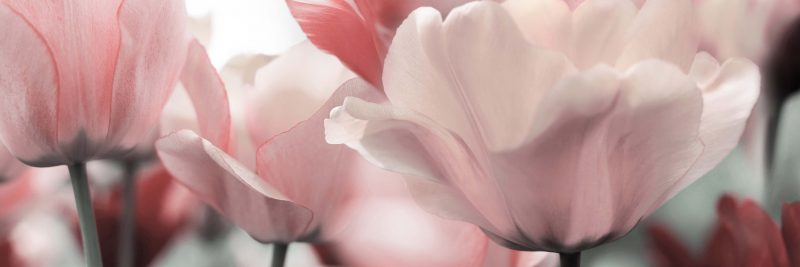 Konyhapanel pink garden