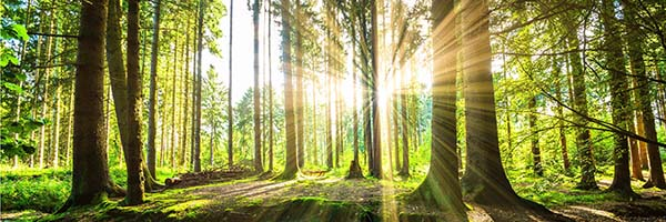 forest konyhapanel