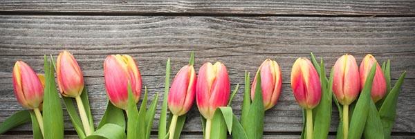 tulipánok konyhapanel