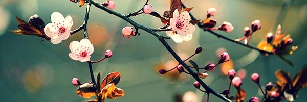 cseresznyevirág konyhapanel