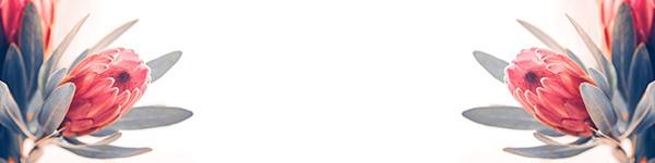 Termék kép protea virag