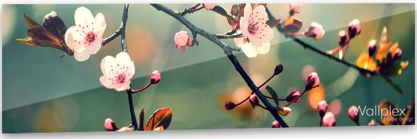 konyhai fali panel cseresznyevirág