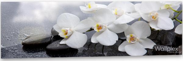 konyhai fali panel orchidea